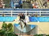 http://www.travelingshoe.com/photos/Show Jumping-17.jpg