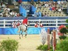 http://www.travelingshoe.com/photos/Show Jumping-19.jpg