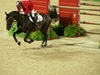 http://www.travelingshoe.com/photos/Show Jumping-25.jpg