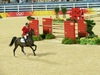 http://www.travelingshoe.com/photos/Show Jumping-26.jpg