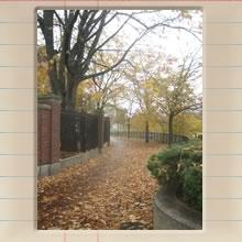 fall_at_harvard_pt_ii_cover_image.jpg