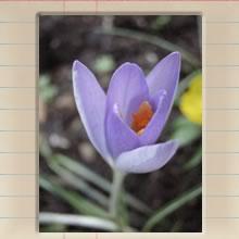 fellows_garden_cover_image.jpg
