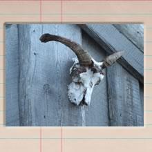 holmavik_kluka_cover_image.jpg