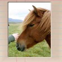 icelandic_horses_cover_image.jpg