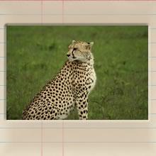 masai_mara_day_iii_cover_image.jpg