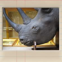 natural_history_museum_cover_image.jpg