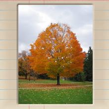 senior_fall_cover_image.jpg